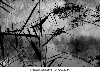 Delicate Riverbank Plants: The formation of the plants on a riverbank resembled Japanese art. The alluring meeting of reflections on the water behind provided a perfect backdrop.