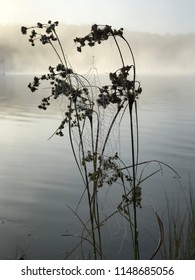 Delicate spider webs covered with morning dew as they cling to a plant in the morning mist. Jewels of nature's perfection. The stillness of the lake reflecting the forest outline.