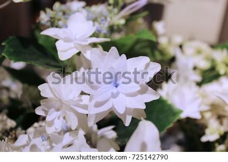 Delicate White Flower Tiny Blue Center Stock Photo Edit Now