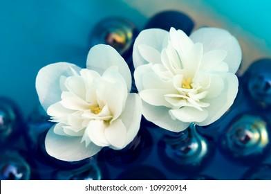 Delicate White Jasmine Flowers on Water