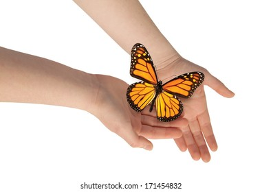 Delicate woman's hands releasing a butterfly.