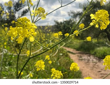 Delicate yellow wildflowers fill a green field