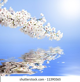 Delicate Yoshino cherry flowers reflected in clear water