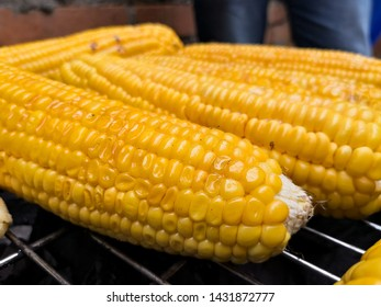 Delicious corn on the cobs roasting on a grill
