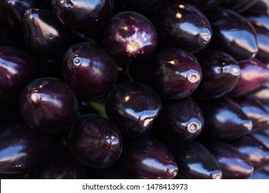Globe Eggplant Images, Stock Photos & Vectors   Shutterstock