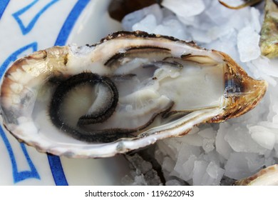 Delicious fresh oysters on ice in a fish restaurant, close up