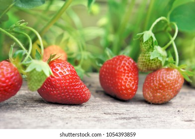 delicious fresh and ripe strawberry on a plank in a garden