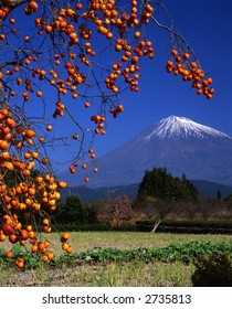 Delicious looking Japanese Kaki near Mount Fuji