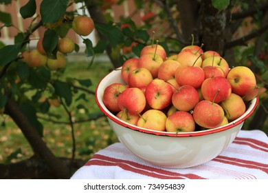 Delicious organic crabapples in an antique bowl under a crababble tree