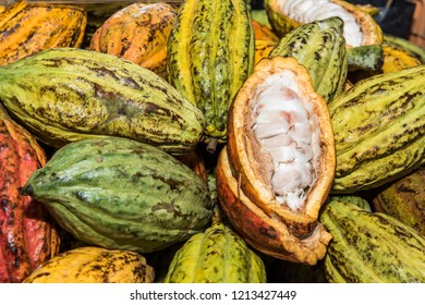 Delicious ripe peeled cocoa and ripe cocoa fruits ready to drying for cocolate manufacturing
