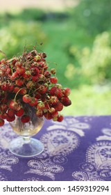 Delicious ripe wild red strawberries in a summer bouquet on a purple table. Uncultivated sort - field strawberries - that grows in Russian fields. Fresh organic food clean eating. Copy space.