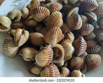 Delicious seafood clams