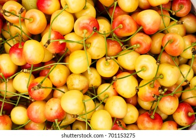 A deliciously delicious yellow cherries are a close-up view