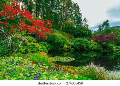 Delightful landscaped and floral park Butchart Gardens on Vancouver Island. In a small pond, overgrown with lilies, reflected trees and flowers