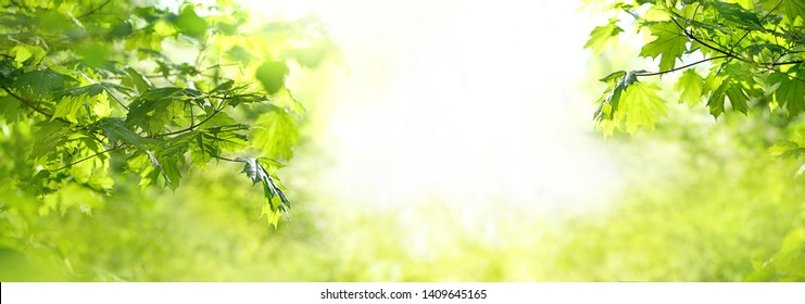 delightful scene with bright green maple leaves on sunny natural abstract background. beautiful green leaves, summer or spring season scene. banner. copy space.