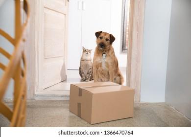 Delivering a Parcel dog and cat