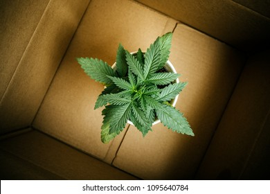 delivery of marijuana plants and seedlings, cannabis business