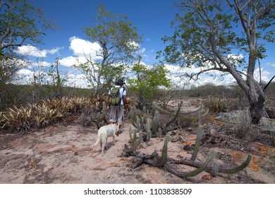 Delmiro Gouveia, Alagoas / Brazil - 04/11/2013: Man walking in caatinga area, vegetation typical of semi-arid region, Brazil Northeast Region - trekking near Talhado Canyon