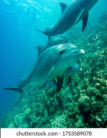Delphine Mammal Marine Dive Underwater