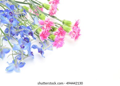 Delphinium and carnation in a white background