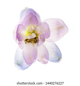 delphinium flower isolated on the white background