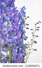 delphinium isolated abstract nature