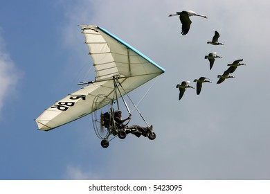 Delta flying in formation with migrating gooses.