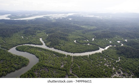 Delta river in mangrove forrest in North Kalimantan