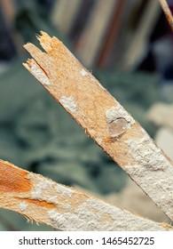demolition work and rearrangement. worker with sledgehammer destroying wall