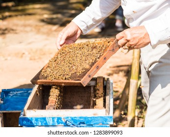 Demonstration about bee keeping for traveller