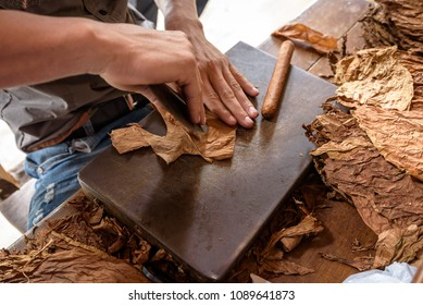 Demonstration of production of handmade cigars. Close up on man hands rolling dried and cured Cuban tobacco leaves in a farm in Vinales Valley, Pinar del Rio, West Cuba.
