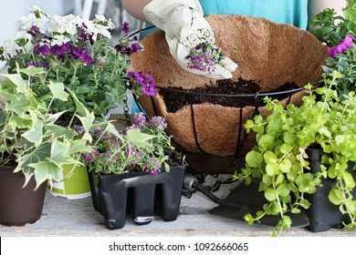 Demonstration of a young woman giving a tutorial on how to plant a hanging basket or pot of flowers. Flowers include Verbena, Petunias, Creeping Jenny and Alyssum. Extreme shallow depth of field.