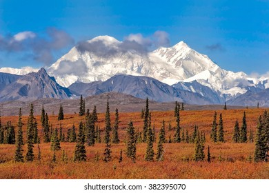 Denali (formerly Mt McKinley) towers over the fall colors in Broad Pass in Alaska