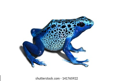 Dendrobates azureus, poison-dart-frog isolated in white