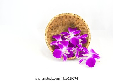 Dendrobium Pompadour orchid flower, isolated