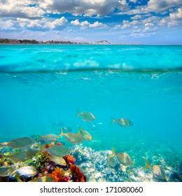 Denia Alicante Marineta Casiana beach underwater with salema fish school [photo illustration]