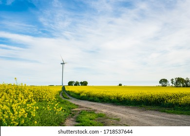 Denmark countryside landscape in spring with flower field and wind power turbine