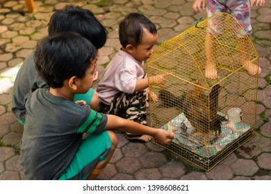 Denpasar, Bali / Indonesia - 2 May 2019: Balinese kids playing with chicken in the cage.