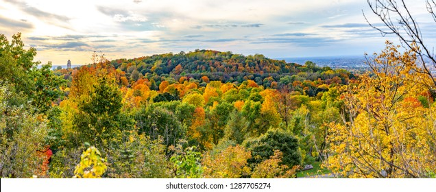 A dense autumn forest in Mount Royal Parc located in Montreal, Quebec, Canada.