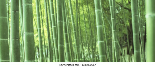 The dense bamboo forest in the park