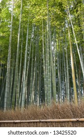 Dense bamboo grove behind a grass fence in Arashiyama in Kyoto, Japan near Tenryu-ji temple. Tenryuji is a Zen Buddhist  temple which means temple of the heavenly dragon and is a World Heritage Site.