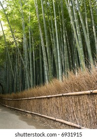 Dense bamboo grove behind a grass fence in Arashiyama in Kyoto, Japan near the famous Tenryu-ji temple. Tenryuji is a Zen Buddhist  temple which means temple of the heavenly dragon.
