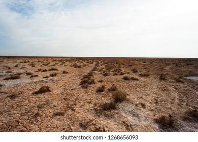 The dense bushes on the edge of the desert.