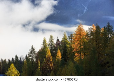 Dense coniferous autumn forest in magical morning mist, with dawning sun rays shining and high mountains in background. Seasons changing, weather, fog, unique sunlight concept, textured background.