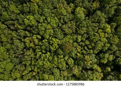 Dense deciduous forest aerial background