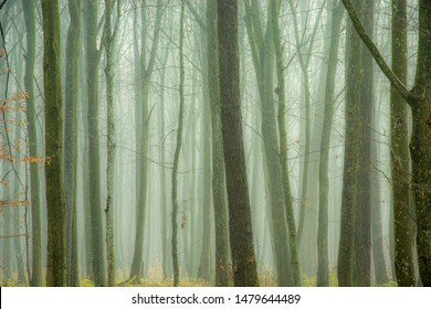 Dense fog in the autumn forest and tree trunks