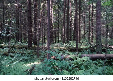 In the dense forest