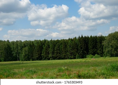 Dense forest against the sky and meadows in Russia.