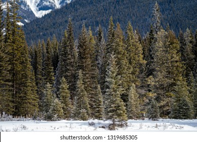 Dense forest along the banks of the Kootenay River in Kootenay National Park, British Columbia Canada during winter