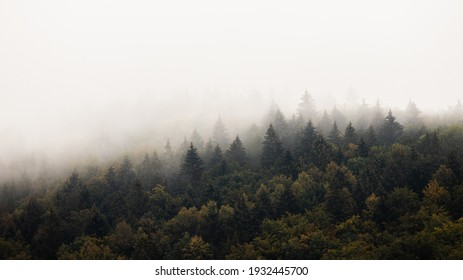 Dense forest with mist in morning with copyspace. Coniferous trees scenery in mysterious haze with space for text. Landscape scene with moody atmosphere.
